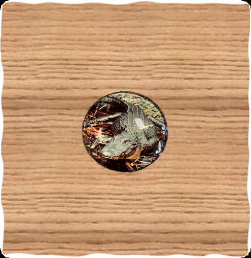Alligator Circle Dome Magnet