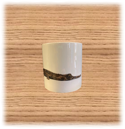 COTW Tomistoma Mug