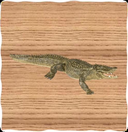 Papo Alligator
